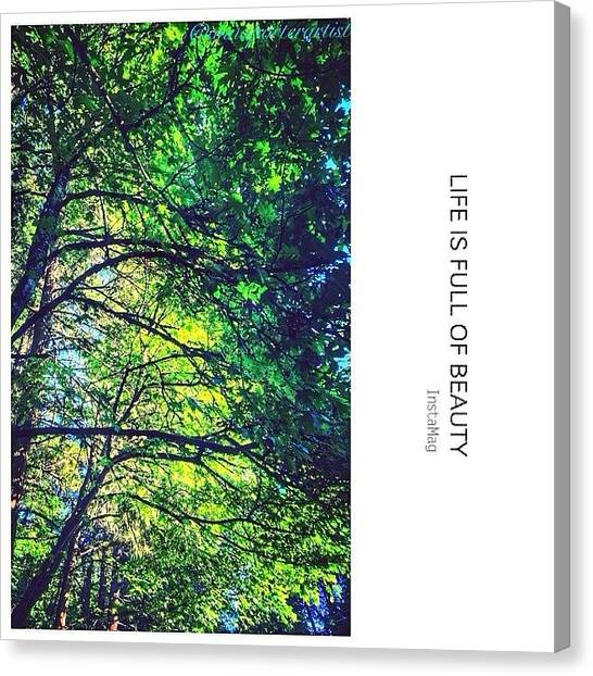 Sunny Canvas Print - Tree Canopy From My Afternoon Walk by Anna Porter