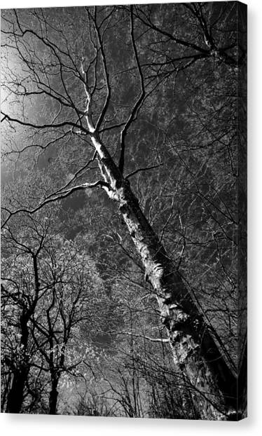 Tree Capillaries Canvas Print