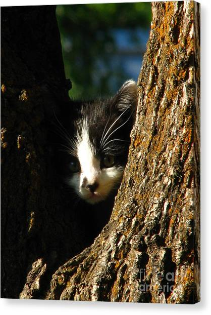 Tree Cat Canvas Print by Greg Patzer