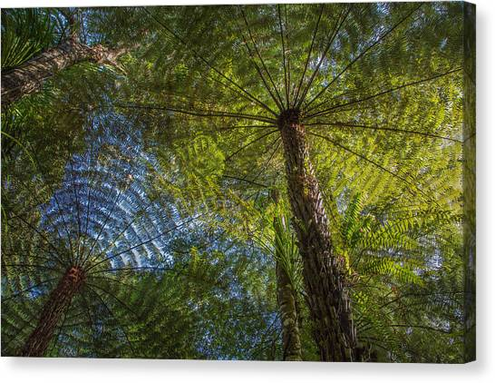 Tree Ferns From Below Canvas Print