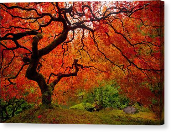 Japanese Gardens Canvas Print - Tree Fire by Darren  White