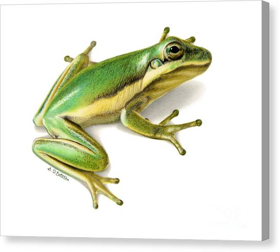Amazon Rainforest Canvas Print - Green Tree Frog by Sarah Batalka