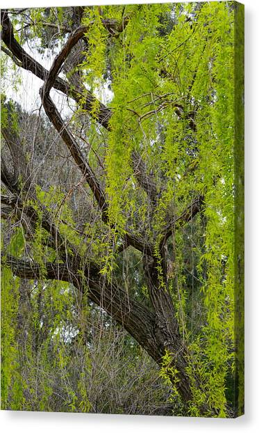 Tree Green Canvas Print