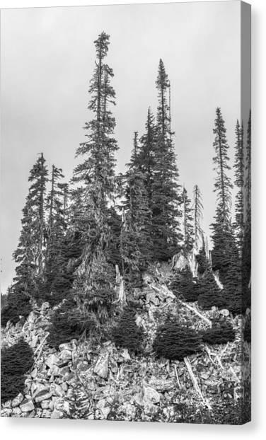 Tree Hill 2 Canvas Print