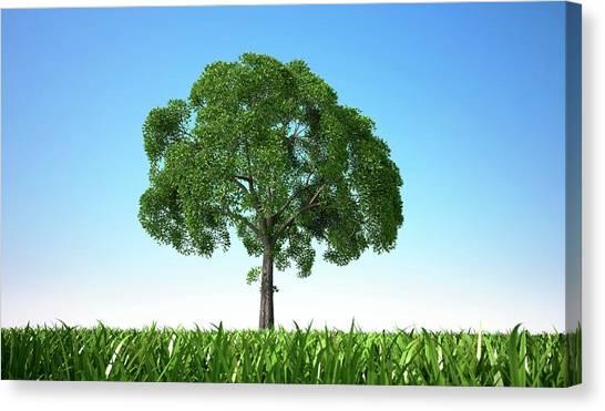 Tree In A Field, Artwork Canvas Print by Leonello Calvetti