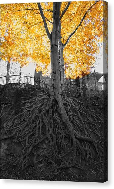 South Carolina Canvas Print - Tree In Falls Park.   by Adam Powell
