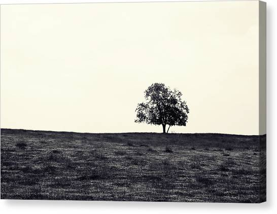 Tree In Field Canvas Print