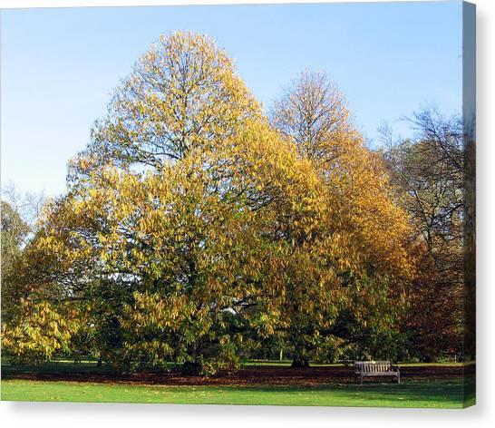Tree In Kew Gardens Canvas Print