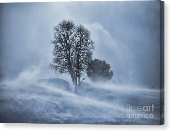 Tree In Snow Blizzard Canvas Print