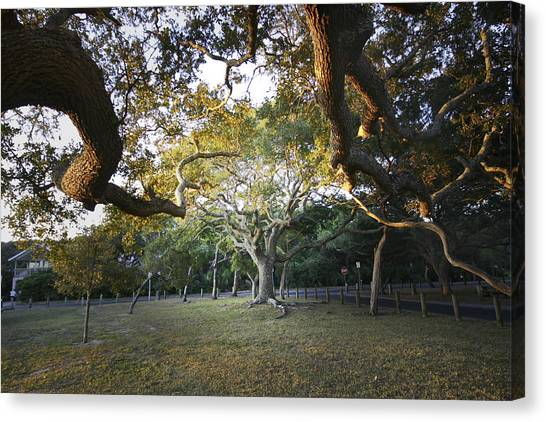 Tree In St. Augustine Park Canvas Print