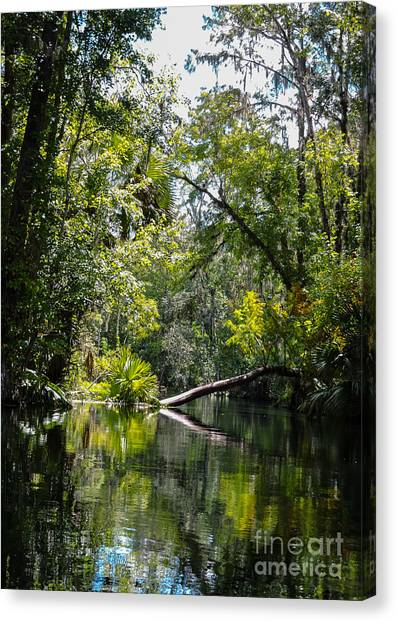 Tree In The Way Canvas Print