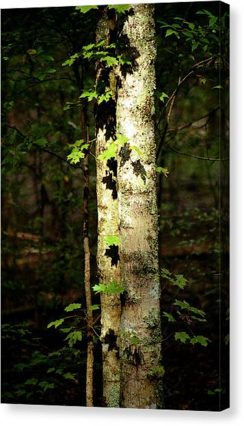 Tree In The Woods Canvas Print