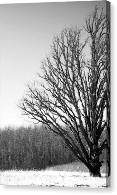 Tree In Winter 2 Canvas Print