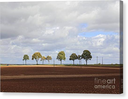 Tree Line France Canvas Print