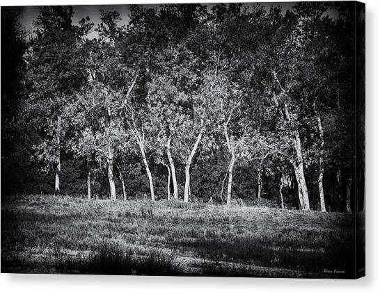 Tree Line In Autumn  Canvas Print