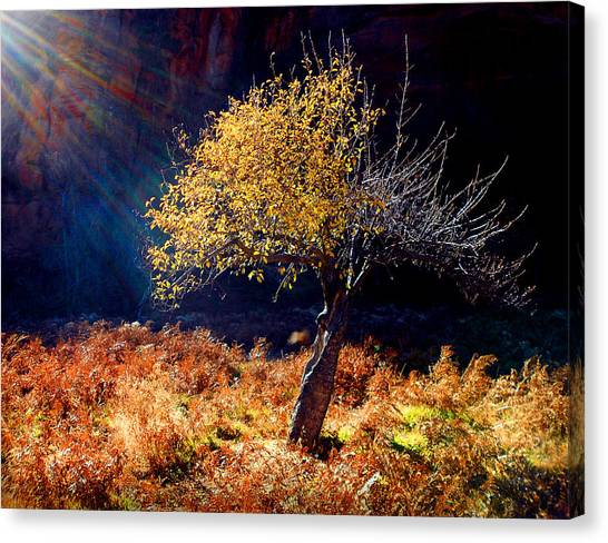 Tree Number 1 Canvas Print