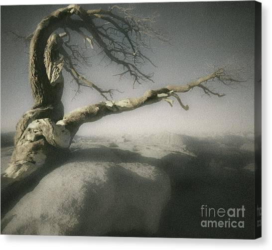 Tree Of Ages Canvas Print
