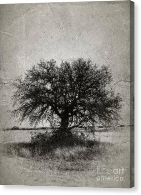 Tree Of Life - No.1958v Canvas Print