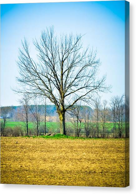 Tree Of Life Canvas Print by BandC  Photography