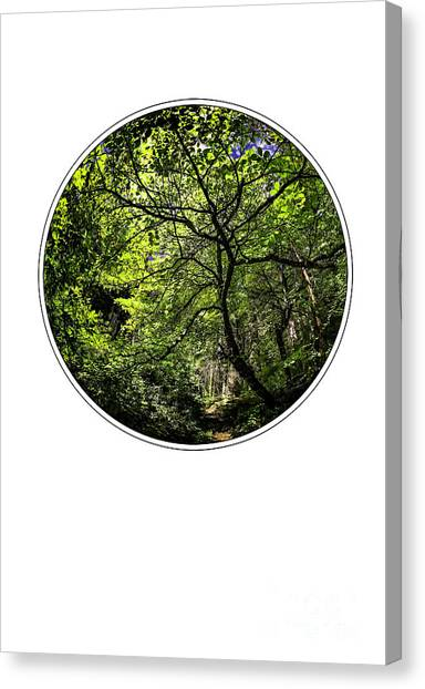 Tree Of Life Canvas Print by Holly Martin