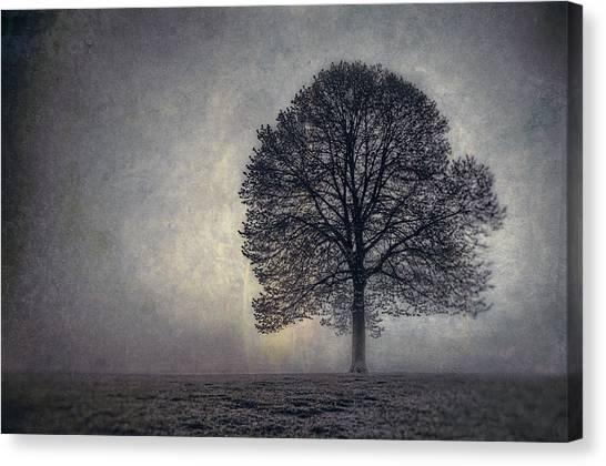 Fog Canvas Print - Tree Of Life by Scott Norris