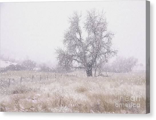 Tree Of Storm Canvas Print