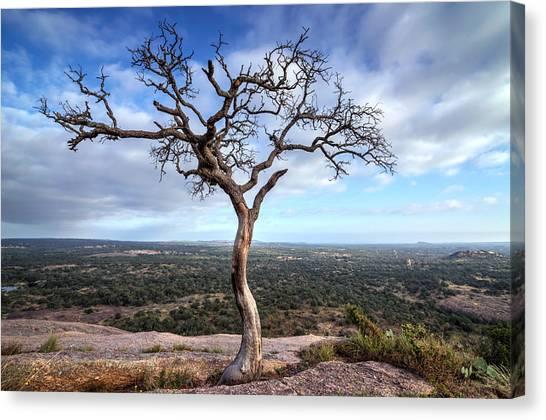 Tree On Enchanted Rock Canvas Print