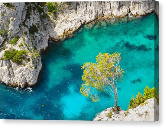 Tree On Turquoise Waters Canvas Print