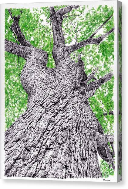 Tree Pen Drawing 4 Canvas Print