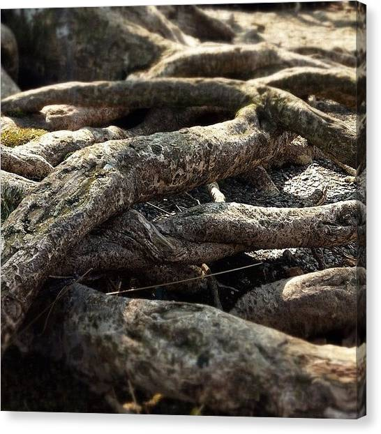 Detail Canvas Print - Tree Roots  by Sean Cahill