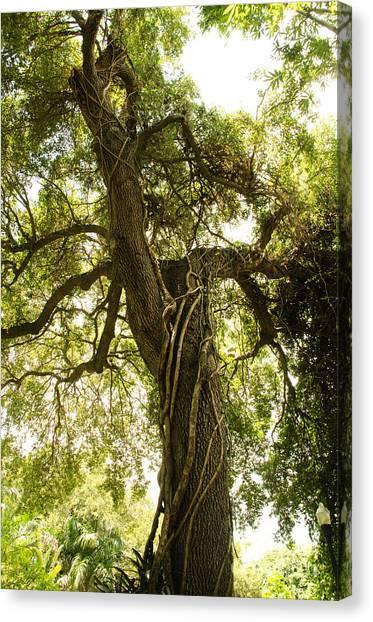 Tree Scape Canvas Print