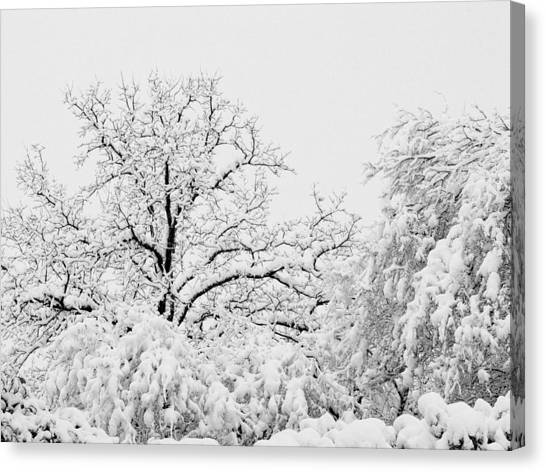 Tree Snow Canvas Print