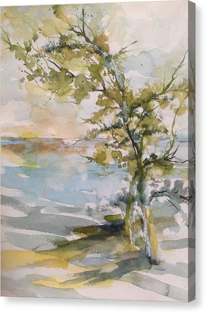 Tree Study Canvas Print