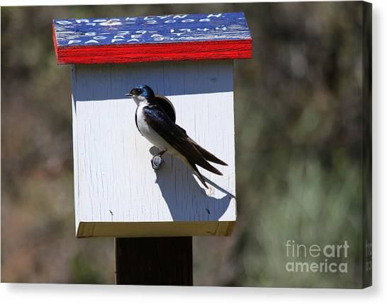 Swallow Canvas Print - Tree Swallow Home by Mike  Dawson