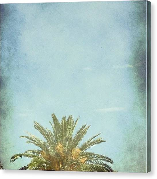 Palm Trees Canvas Print - Tree Top  by Judi FitzPatrick