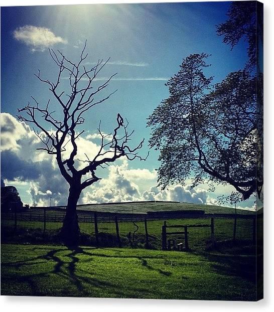 Golfers Canvas Print - #tree #treeporn #sky #skyawards by David Cockell