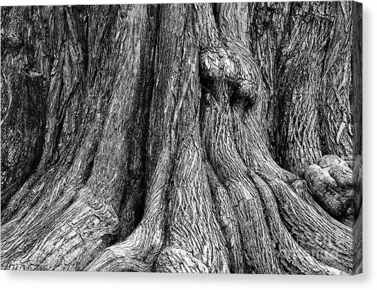Tree Trunk Closeup Canvas Print