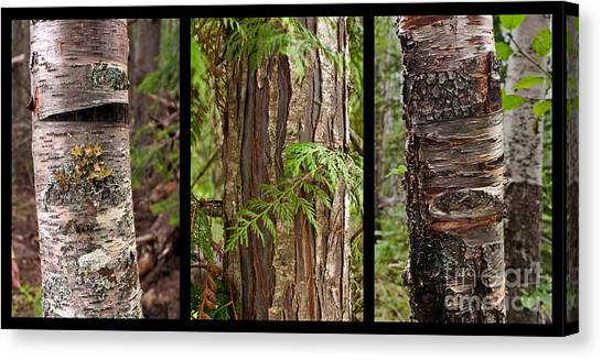 Tree Wear By Nature Canvas Print