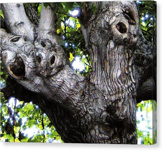 Tree With A Heart Canvas Print by Dan Twyman