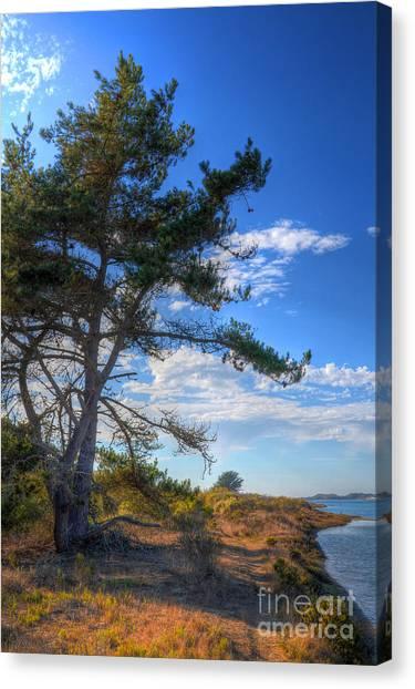 Treebay Canvas Print