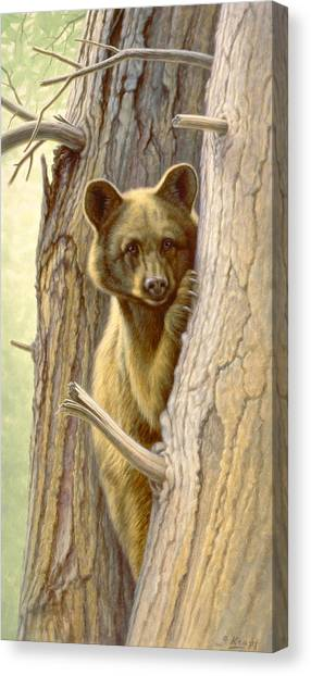 Black Bears Canvas Print - Treed by Paul Krapf