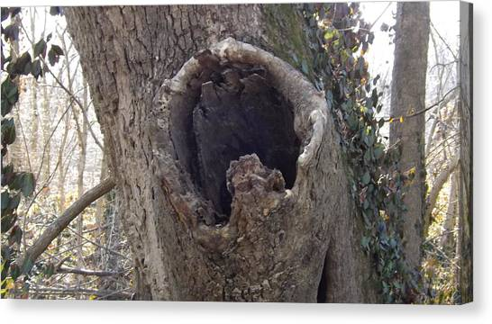 Treehole Canvas Print