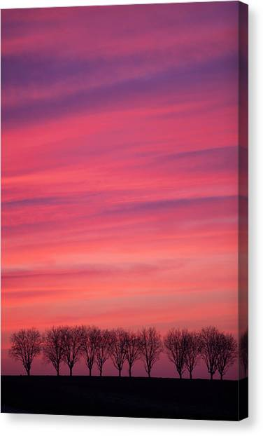 Treeline Canvas Print - Treeline At Sunset by Pascal Goetgheluck/science Photo Library