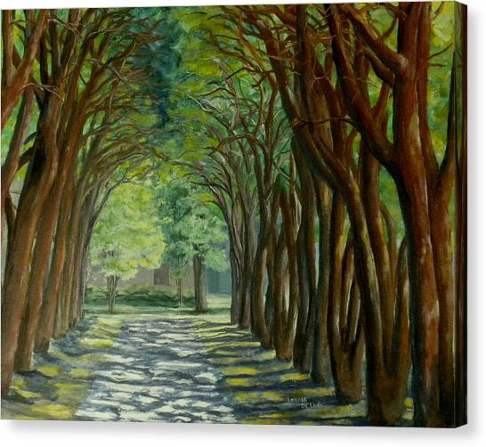 Treelined Walkway At Lsu In Shreveport Louisiana Canvas Print