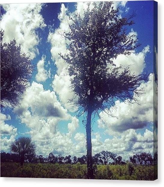Fibonacci Canvas Print - Trees And Clouds Harmonized Freely by Lydia Gottardi