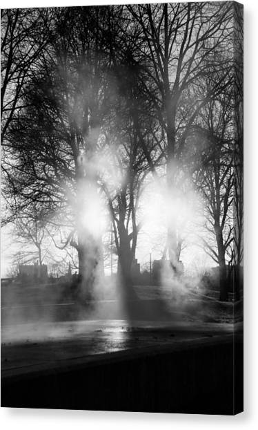 Trees And Fog Canvas Print by David Pinsent
