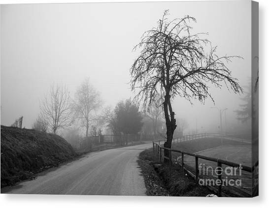 Trees And Fog Canvas Print