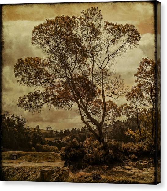 Trees And Hot Sand Canvas Print