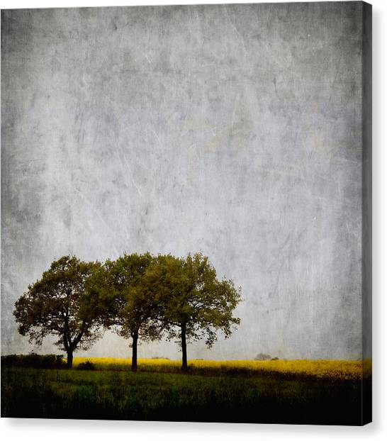 Spring Trees Canvas Print - Trees At Sunrise by Carol Leigh