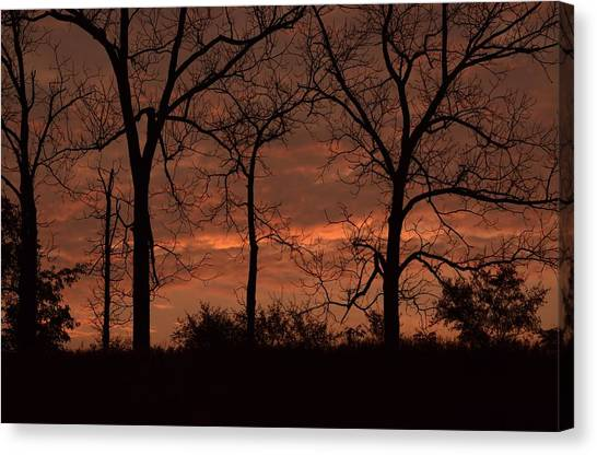 Trees At Sunrise Canvas Print